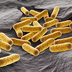 a-complete-guide-to-e.-coli-homogenization