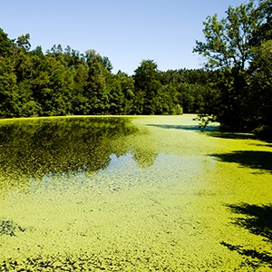 advantages-of-cell-disruption-for-algae-based-biofuel